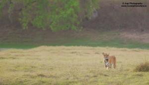 Wildlife Safari in Umred Karhandla National Park
