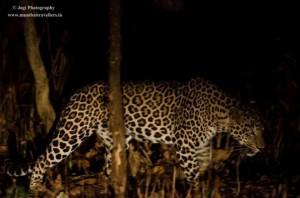 Bera Leopard safari in rajasthan
