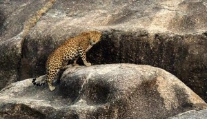 pench national park