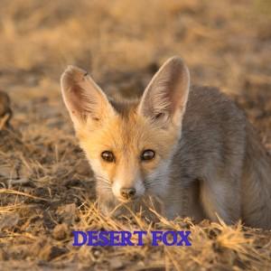 desert fox expedition