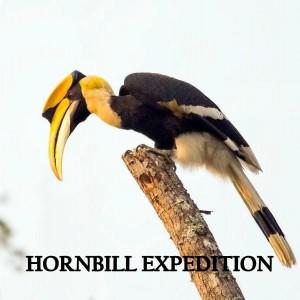 hornbill expedition