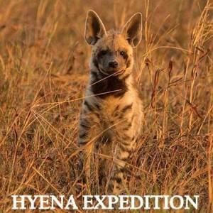 hyena-expedition