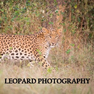 leopard photography expeditions