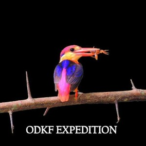 odkf expedition