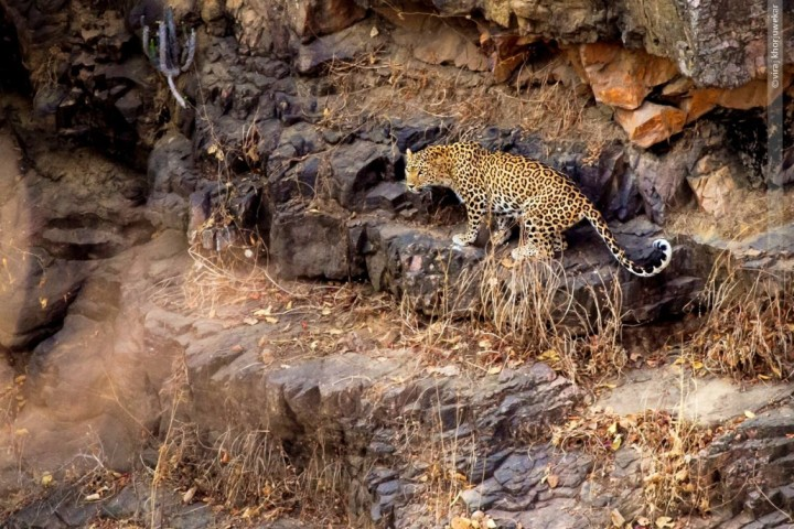 Ranthambore-National-Park--1030x687