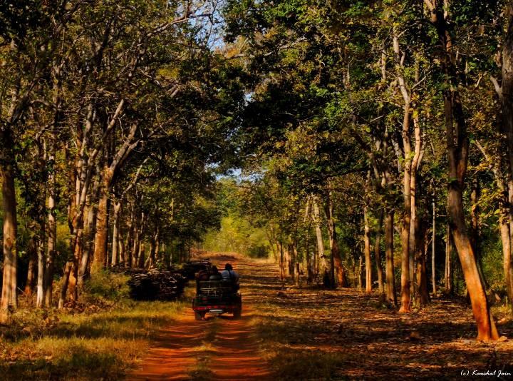 Tadoba Safari Bookings