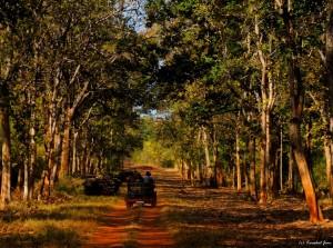 Tadoba Safari Bookings