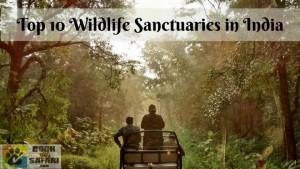 Top 10 Wildlife Sanctuaries in India