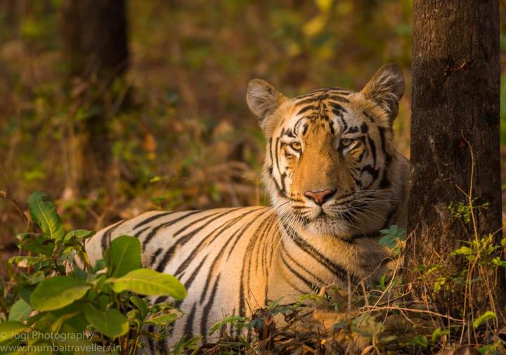 Umred Karhandla Wildlife Sanctuary at Nagpur India