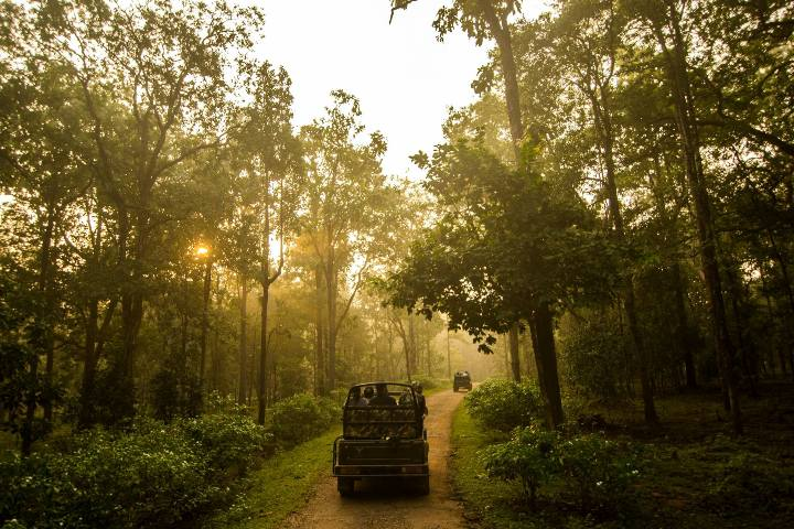 Wildlife Safari in Nagzira Wildlife Sanctuary