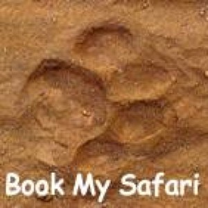 Wildlife tours & Safaris in India