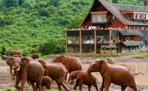 how to visit masai mara