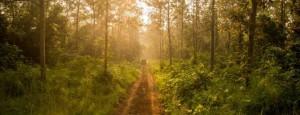 ranthambore wildlife trip