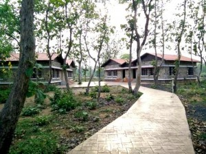 tadoba hotels and resorts