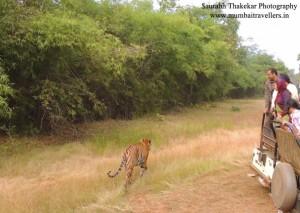 umred karhandla safari bookings