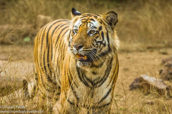Bandhavgarh Safari Booking