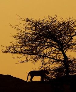 bera leopard safari