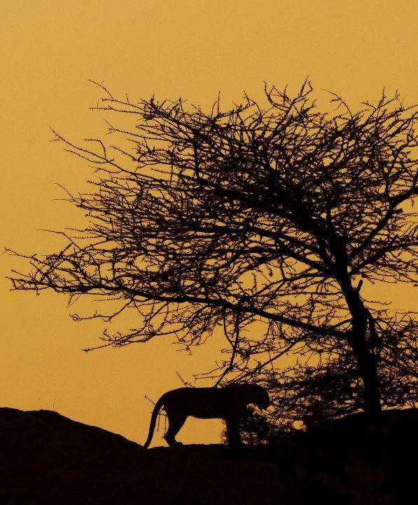 bera-leopard-safari