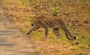 Biodiversity at Tadoba National Park