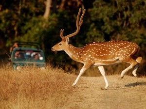 Gir National Park Safari