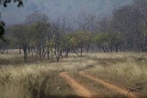panna safari booking and gates