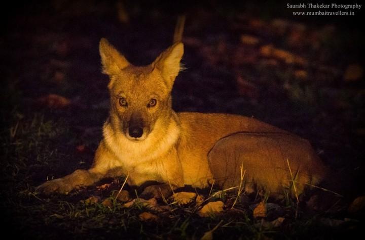 Wildlife in Umred Karhandla Sanctuary