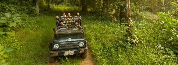 tips-for-wildlife-safari