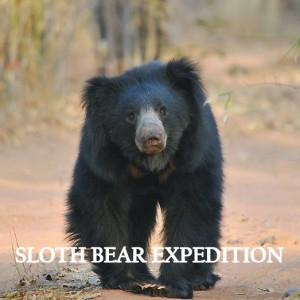 sloth bear expedition