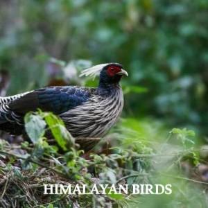 himalayan bird expedition
