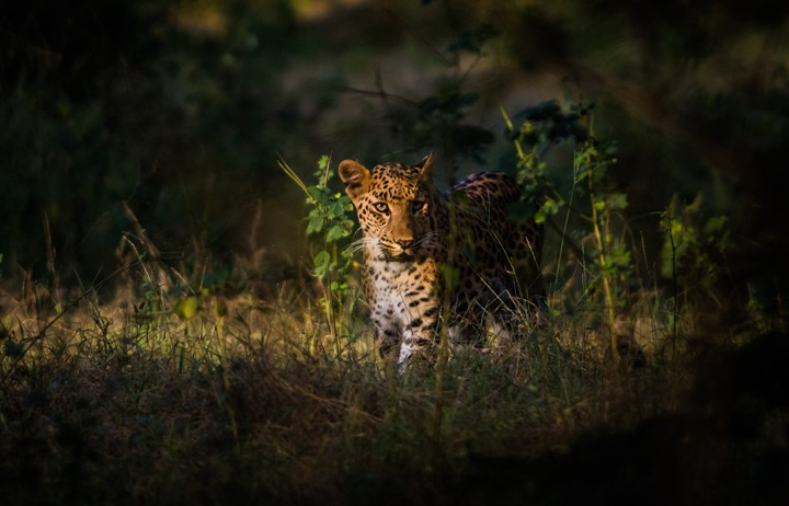 KABINI WILDLIFE SAFARI