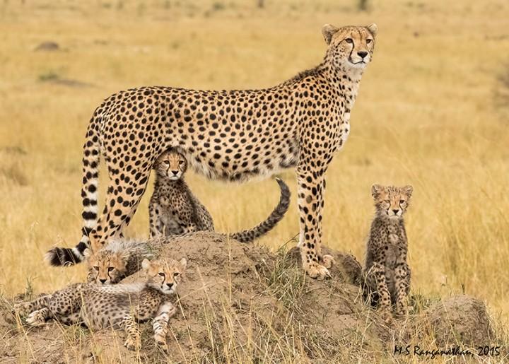 masai-mara-budget-package-720x515