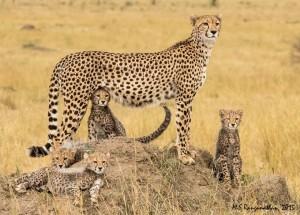 masai mara budget package