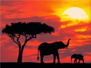African wildlife safari tours