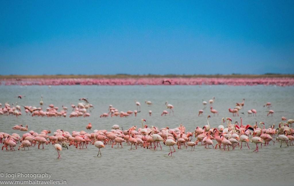 KMMSP - Lake Nakuru