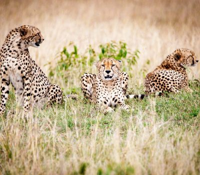 WILDLIFE EXPEDITIONS GROUP TOURS